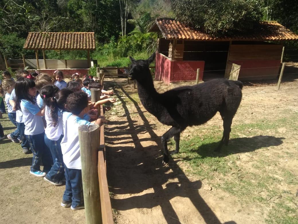 Excursão Fazenda Bichomania